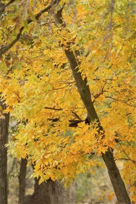 trees shrubs  fall color midwest living