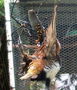 Spider eating a bird caught in its web! | Animals eating ...