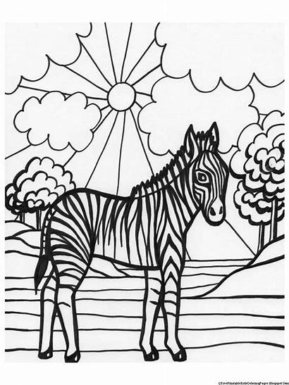 Coloring Pages Zebra Printable Books Duathlongijon Boys