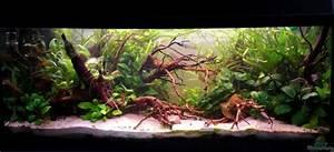 Aquarium Einrichten Beispiele : neue einrichtung aus mein asien becken nur noch als beispiel von dominik ~ Frokenaadalensverden.com Haus und Dekorationen