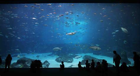 aquarium visits letter from serbia