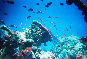 Marine ecosystem - Wikipedia  Aquatic