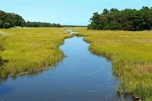 Topic  Wetlands