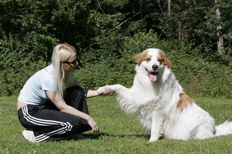 7 Tipps Für Das Tägliche Hundetraining  Partner Hund Magazin