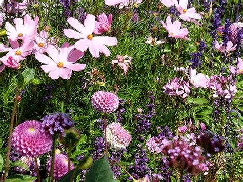 Rosa Blühende Stauden staudenbeete anlegen und pflegen bl 252 tenpracht vom