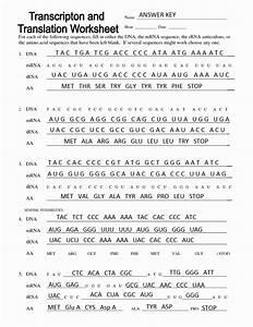 Transcription And Translation Worksheets Answers Key
