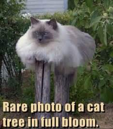 cat jokes pictures jokes4laugh