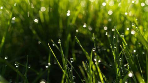 Spring Rain Wallpaper For Desktop (69+ Images