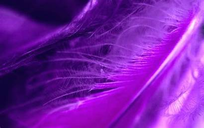 Purple Feather Feathers Wallpapers Cool Desktop Artistic