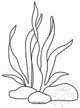 Seaweed Coloring Printable Pages Ocean Drawing Coral Sea Plants Underwater Print Under Habitat Nature Neocoloring Cartoon Templates Happy Stencil Coloringpage sketch template