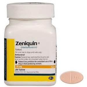 zeniquin for cats marbofloxacin zeniquin for dogs and cats vetrxdirect