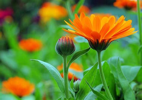 Garten Pflanzen by Wettervorhersage Im Garten Diese Pflanzen Sagen Das