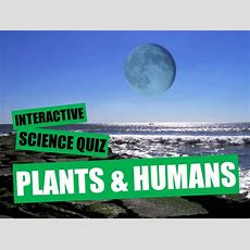 Interactive Voting Ppt  Plants And Humans