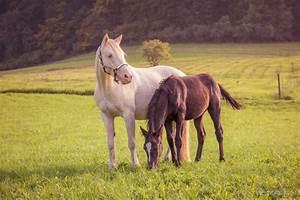Bilder Von Pferden : sommer special gesunde pferde auf der weide ein blogazin rund um die lust am ~ Frokenaadalensverden.com Haus und Dekorationen