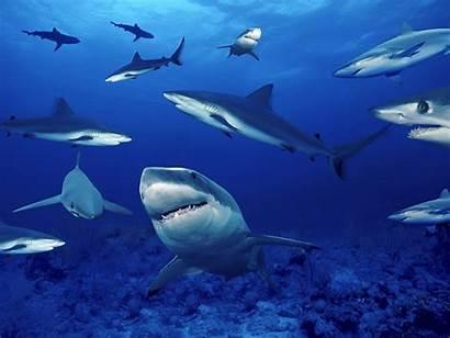 Marine Sea Fanpop Ocean Underwater Animals Creatures