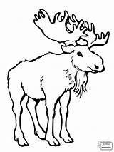Moose Cartoon Drawing Outline Coloring Drawings Getdrawings Paintingvalley sketch template
