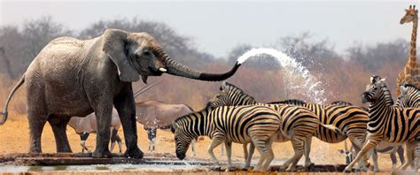 African Travel / Sports Blog