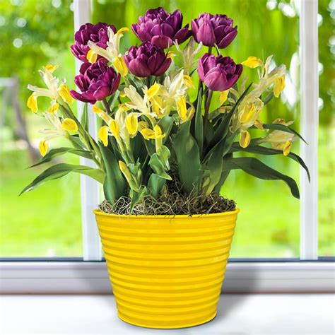 april bulb garden of the month tulips and iris