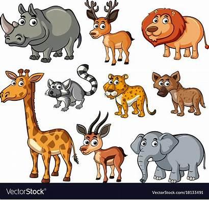 Animals Different Kinds Wild Vector