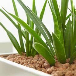 Hydrokultur Shop Online : zimmerpflanzen automatisch bew ssern mein sch ner garten ~ Markanthonyermac.com Haus und Dekorationen