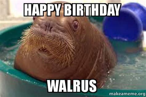 Walrus Memes - meme