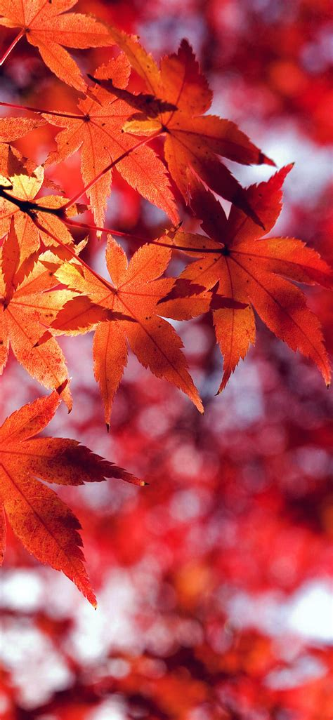Fall Backgrounds Iphone 8 by Mt33 Fall Leaf Mountain Bokeh Papers Co