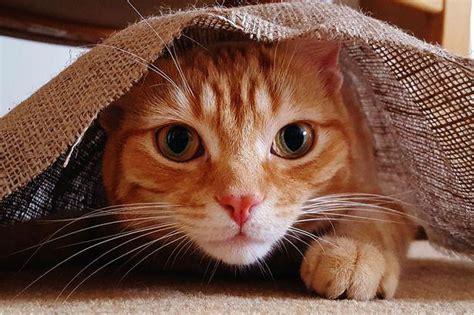 Smieklīgie kaķi - Spoki