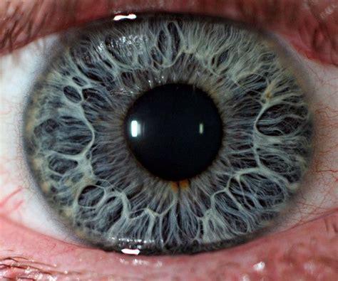 magnified eye tim voi google   microscope