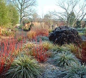 gardendesignsmore plants  winter interest