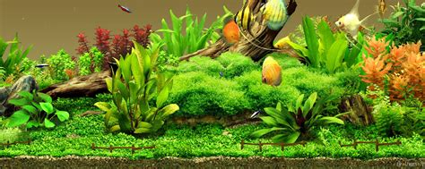 Animated Coral Reef Wallpaper - coral reef aquarium animated wallpaper wallpapers