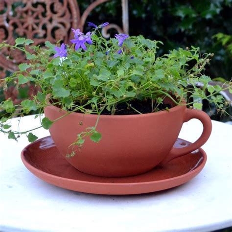 Teacup & Saucer Planters   Terracotta.uk.com   The Home of