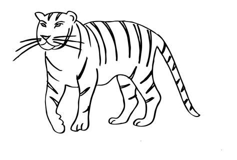 ausmalbilder zum ausmalen malvorlagen tiger kostenlos