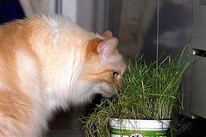 Katze Erbricht Oft : katze erbricht wann zum tierarzt ~ Frokenaadalensverden.com Haus und Dekorationen