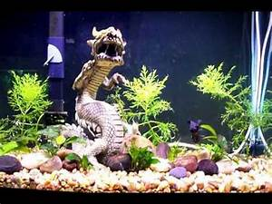 Black Moor Goldfish and Fantail Goldfish - YouTube