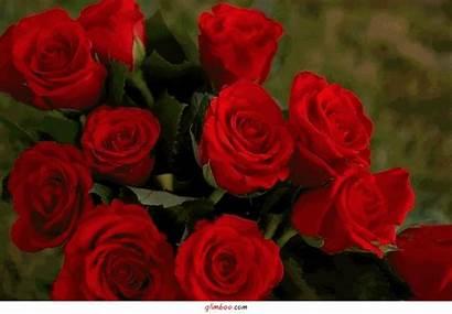 Roses Animees Belles Centerblog Beaute