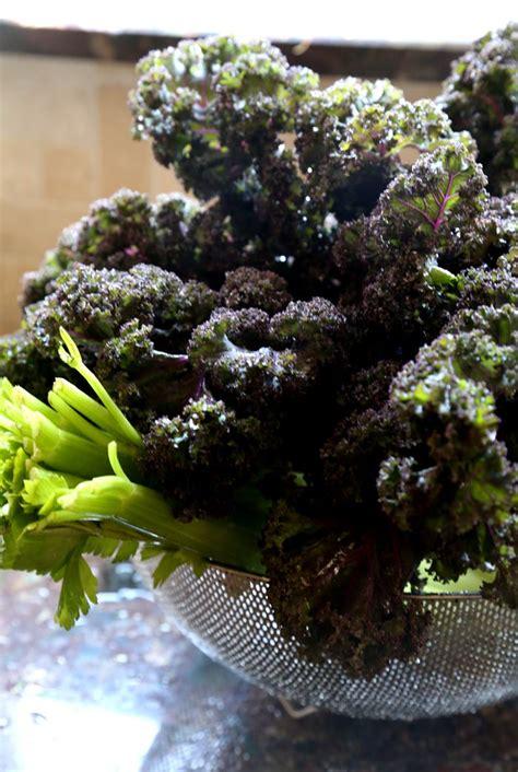 kale recipes juice benefits celery plus juicer machine incredible nutritional ll