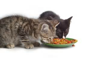 feeding cats what to feed your cat