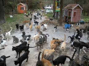 caboodle ranch a 100 acre cat sanctuary