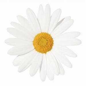 Yellow Centered Daisy | SHADES OF YELLOW | Pinterest