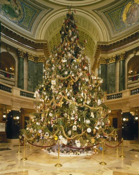 annual wisconsin christmas tree photograph wisconsin historical society
