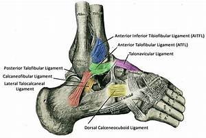 Low Ankle Sprain - Foot & Ankle - Orthobullets.com  Calcaneofibular