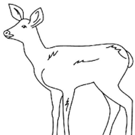 drawing fawn