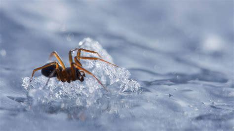 was machen wespen im winter kf gegen den k 228 ltetod wie 252 berwintern spinnen und insekten welt der wunder tv