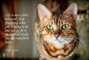 Cat Death Quotes Inspirational
