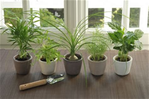 Zimmerpflanzenlexikon