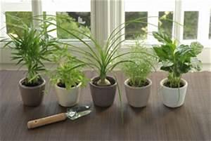 Schädlinge Zimmerpflanzen Klebrige Blätter : sch dlinge an zimmerpflanzen bek mpfen ~ Lizthompson.info Haus und Dekorationen