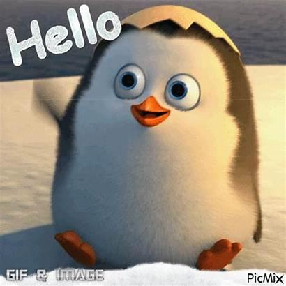 Hello Penguin Ex Picmix Chanson Tendresse Pingouin