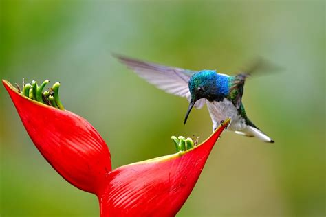 what foods do hummingbirds eat