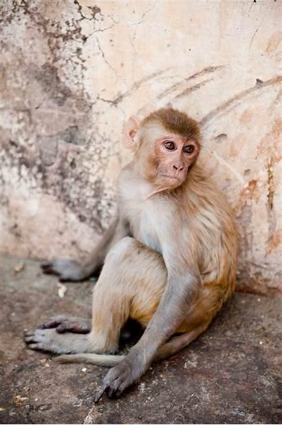 Asian Galore Monkeys Monkey Exposures