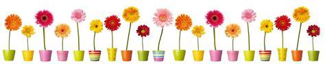 cuisine en aluminium crédence de cuisine fleurs et pots colorés c macredence com